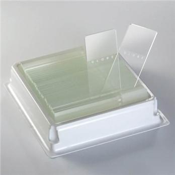Diamond™ White Glass Color Frosted Microscope Slides